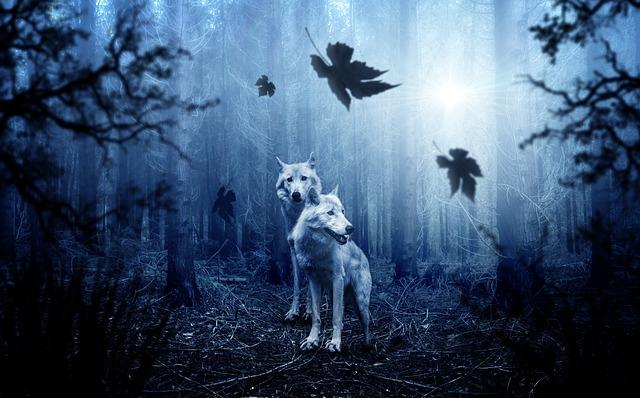 dva vlci v lese