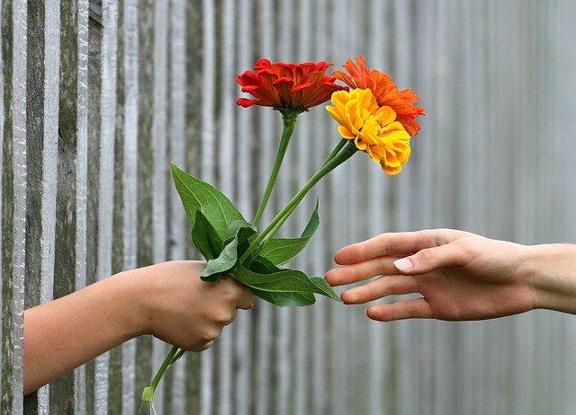 květiny skrz plot